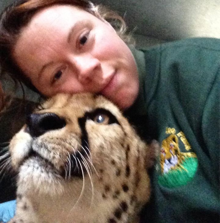 Witnesses said staff tried to distract the big cat with meat as the animal attacked the zookeeper Rosa King, pictured with one of the zoo's cheetahs.