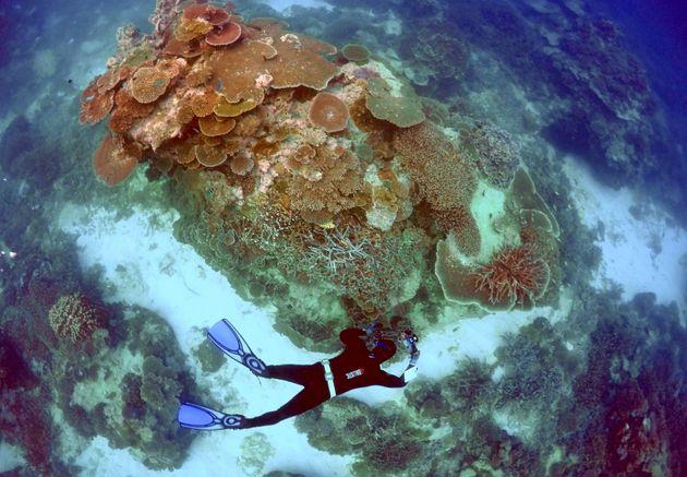 A rangerinspects the Great Barrier Reef near Lady Elliot Island, Australia. The reef has experienced...