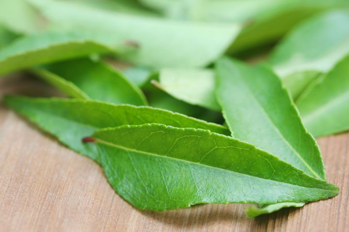 A bunch of fresh curry leaves from the curry leaf tree.