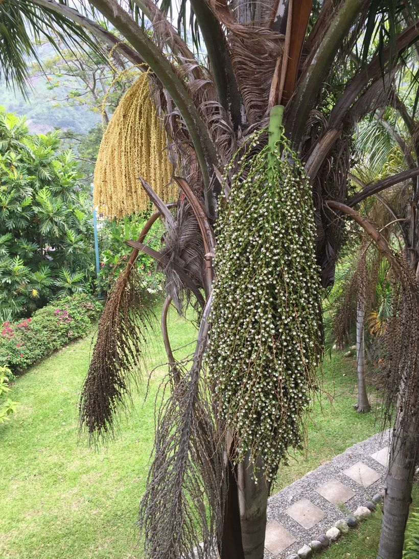 The Many Stages of Transformation of a Date Palm