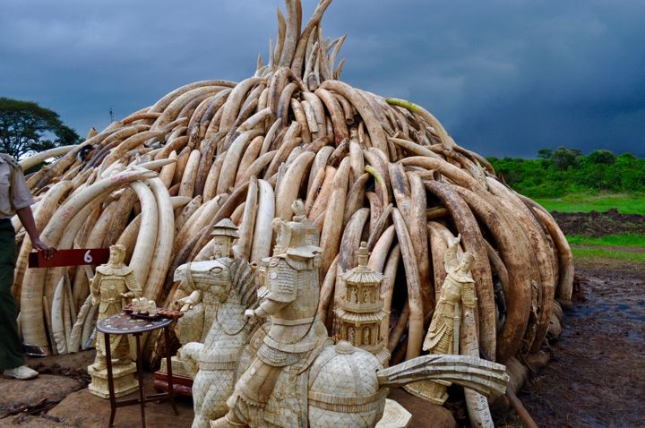 A pyre of ivory at Nairobi National Park in April 2016.
