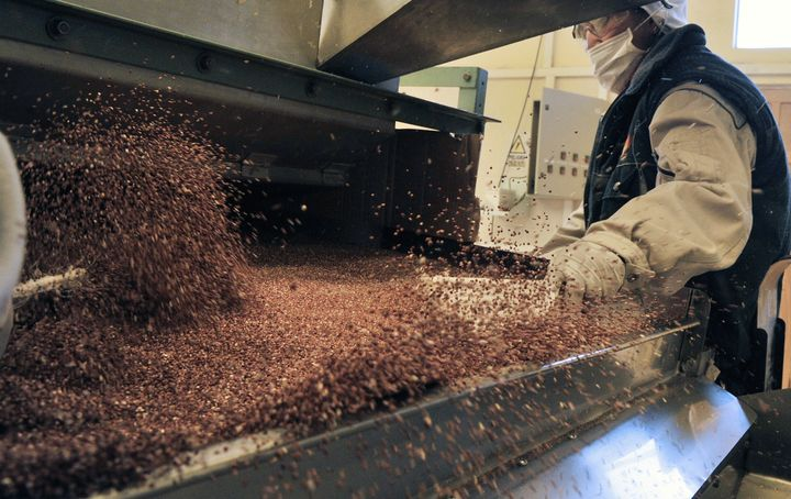 A quinoa processorin Bolivia.