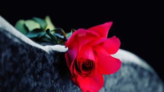 Red rose on the tombstone