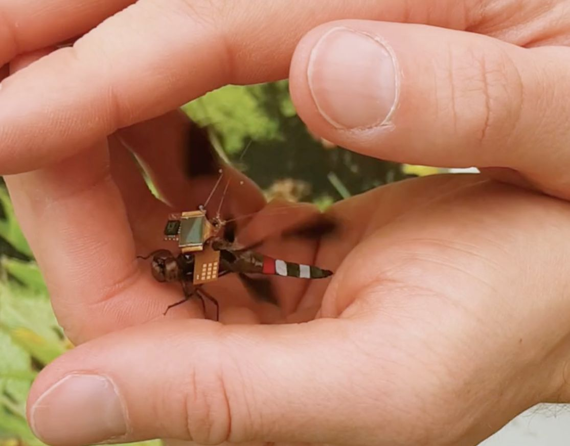 Researchers Have Turned A Live Dragonfly Into A Cyborg