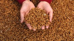Why You Should Let Maggots Feast On Your Leftover
