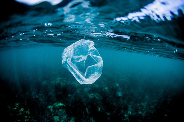 It can take between 10 and 20 years for a plastic bag to decompose. Activist Margaret Atwood is calling...