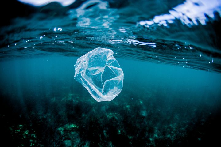 It can take between 10 and 20 years for a plastic bag to decompose. Activist Margaret Atwood is calling for biodegradable and organic replacements for plastic products.