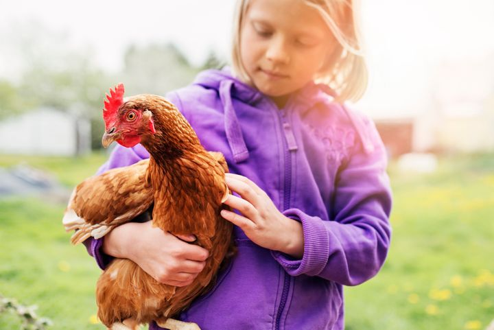 A girl holding a chicken a little too close.