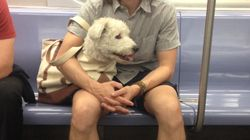 New Yorkers Working Around The Subway-Dog-Ban Is What You Need Right