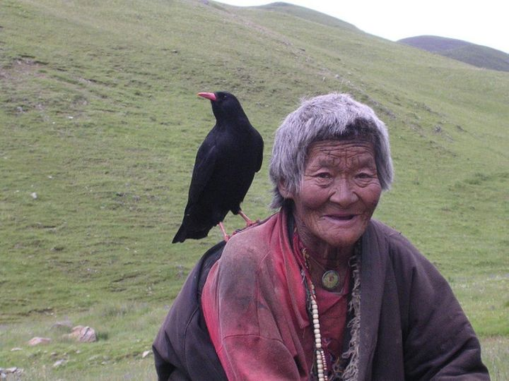 A red-billed chough, thought to be the reincarnation of this woman's daughter, sits on her shoulder.