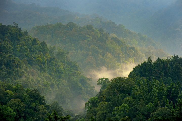 Forest of Gede Pangrango, Indonesia.