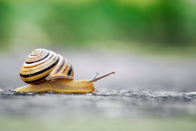 The Newest Beauty Fad Involves Putting Snail Essence ON YOUR
