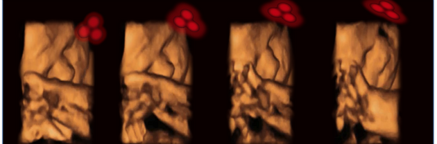 Incredibly, Babies Can Recognise Faces Before They've Even Been
