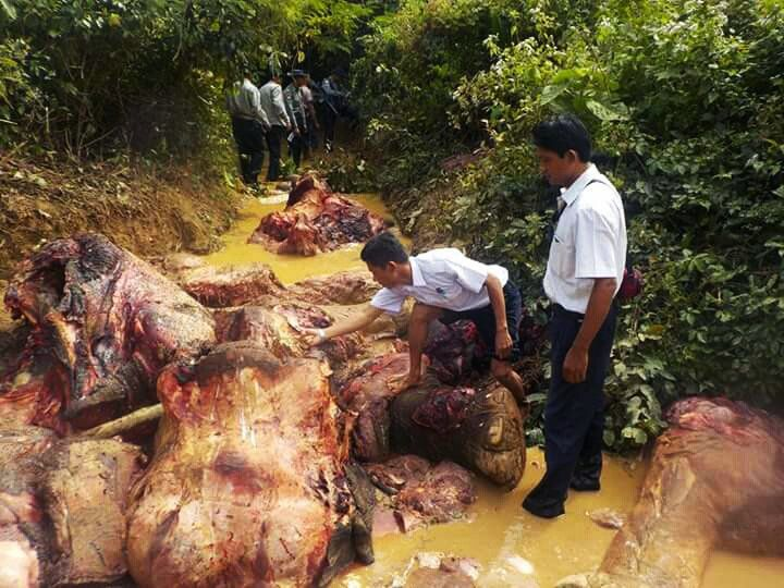 Myanmar authorities inspect a mutilated elephant carcass.