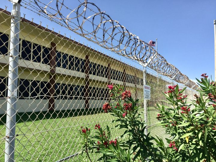 Flowers grown alongside the barbed wire fence at Guantanamo Bay.