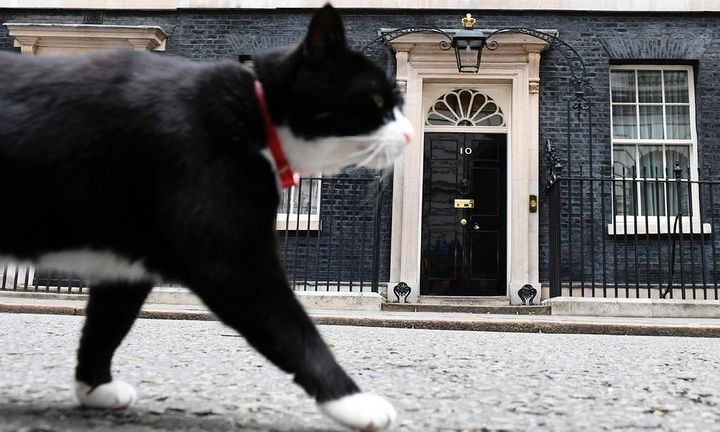 The popular 10 Downing Street cat Palmerston get's camera time in front of the waiting media Friday morning.