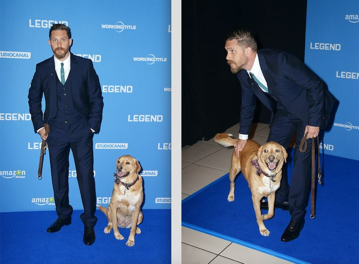 """Actor Tom Hardy with his beloved dog, Woodstock, at the Britishpremiere of """"Legend"""" in 2015."""