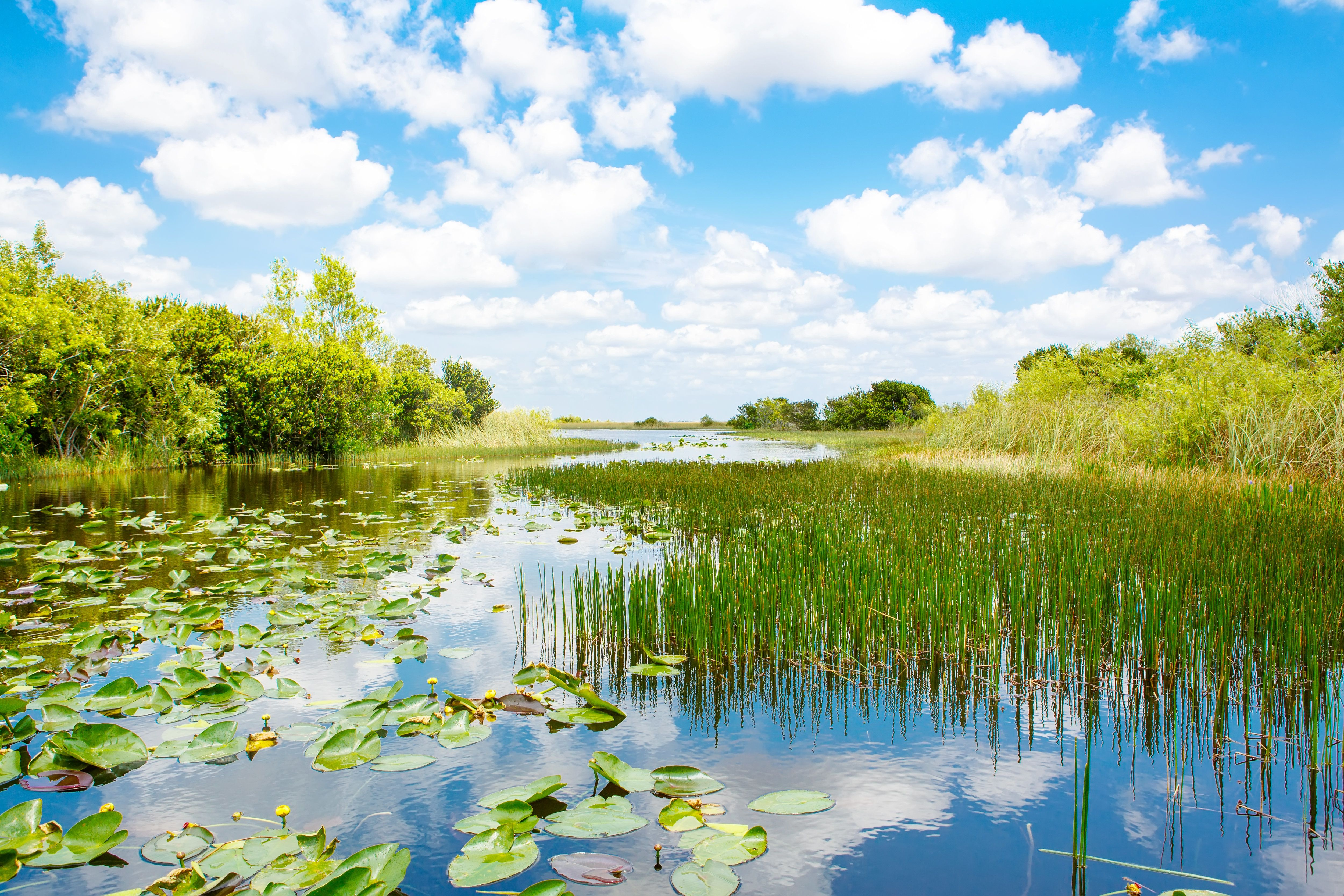 """These <a href=""""http://whc.unesco.org/en/list/76"""" target=""""_blank"""">subtropical wetlands</a> came into being at the end of the l"""