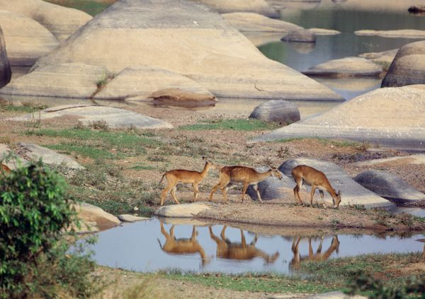 """One of the largest protected areas in West Africa, <a href=""""http://whc.unesco.org/en/list/227"""" target=""""_blank"""">this wonderlan"""