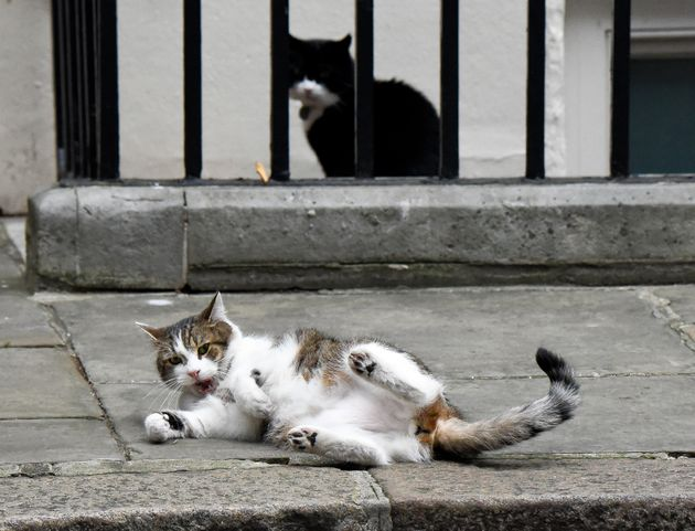 e3177410171 Larry And Palmerston, The Downing Street Cats, Look Like They've ...