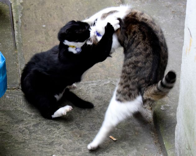 Larry and Palmerston scrap last