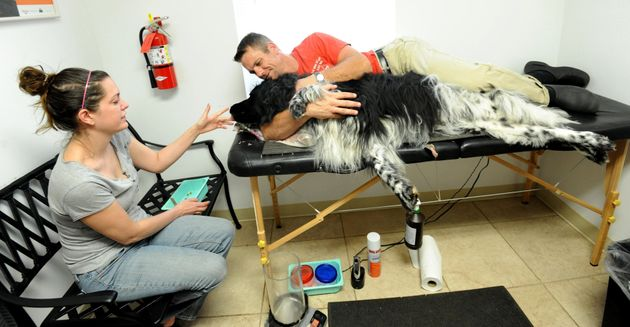 A dog giving blood at a blood bank in
