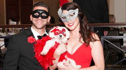 There Was A Fancy Masquerade Ball For Dogs And It Did Not
