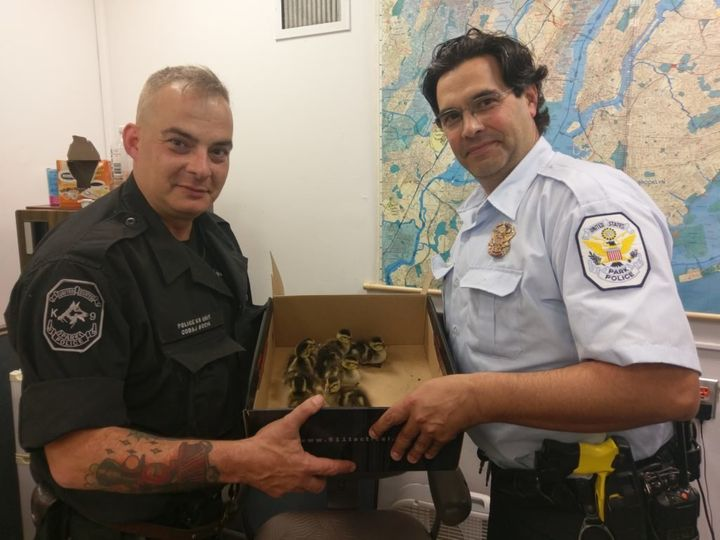 A member of the NYPD and the U.S. Park Police show off the ducklings they rescued.