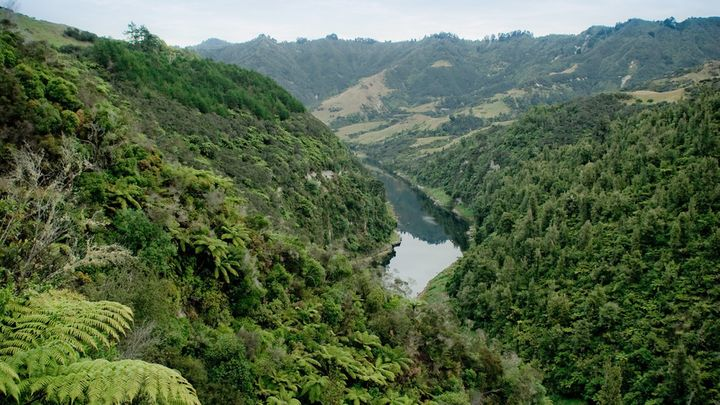 The Whanganui River, seen here, is now a person under New Zealand law.