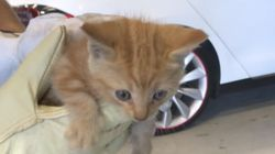 Tiny Meows From Inside Man's Car Reveals Most Adorable