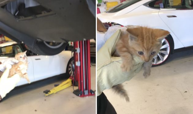 A tiny kitten is seen after being pulled out of a Tesla car in whichit had become