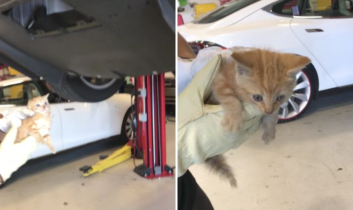 A tiny kitten is seen after being pulled out of a Tesla car in whichit had become stuck.