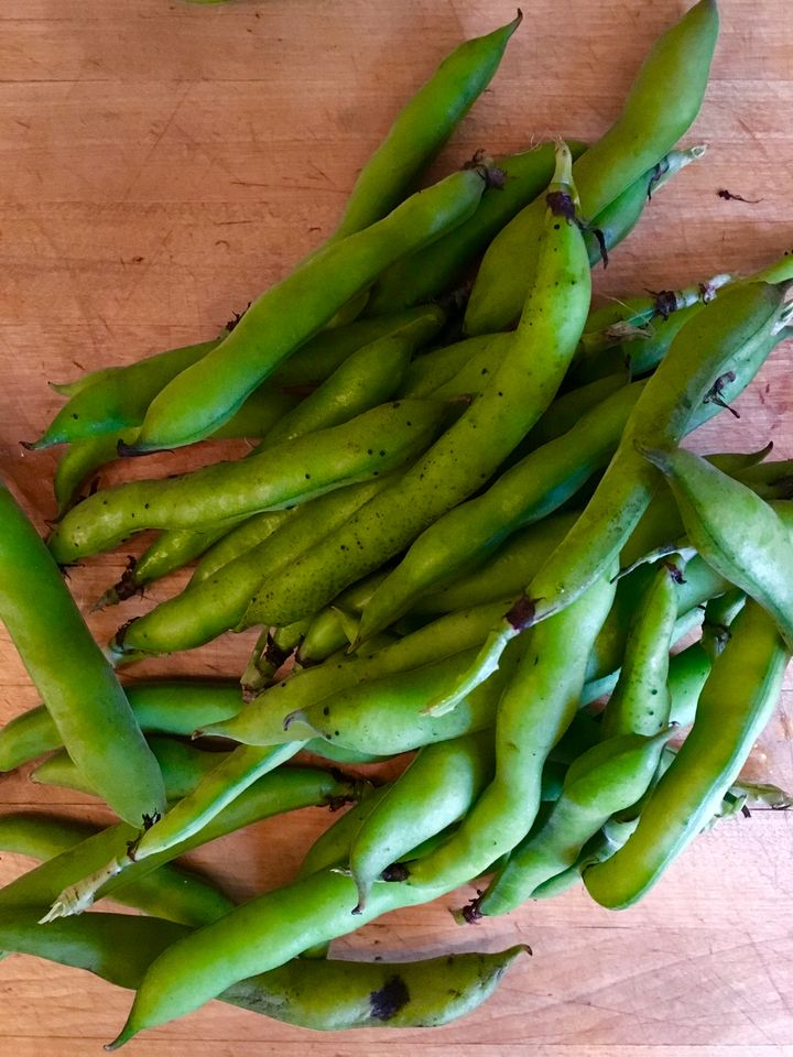 Fava beans - broad beans in the UK - from our local farmers' market