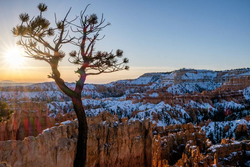 <em>If you look closely, the hoodoos disappear to reveal many species of trees in this high-desert national park!</em>
