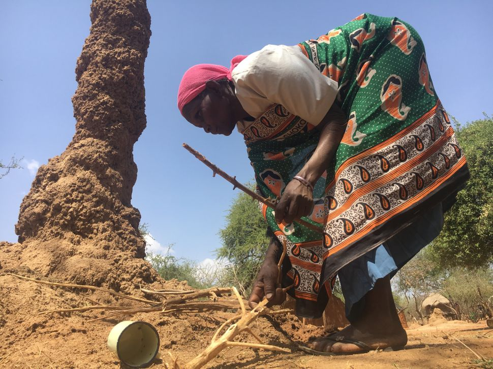 Chepserum prepares to catch termitesfrom a towering termite mound near her home.