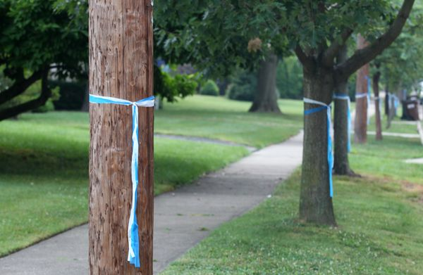 Blue and white ribbons were tied onto trees near the funeral service.