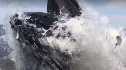 Holy S**t!' Leaping Whale Nearly Capsizes Jersey Fishing