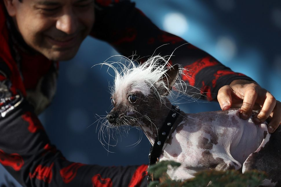 Dane Andrew of Sunnyvale, California, with Rascal, his Chinese Crested.
