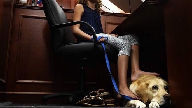 A girl with a facility dog named Pella that she has helped train, in a Centennial, Colorado, courtroom. The specially trained