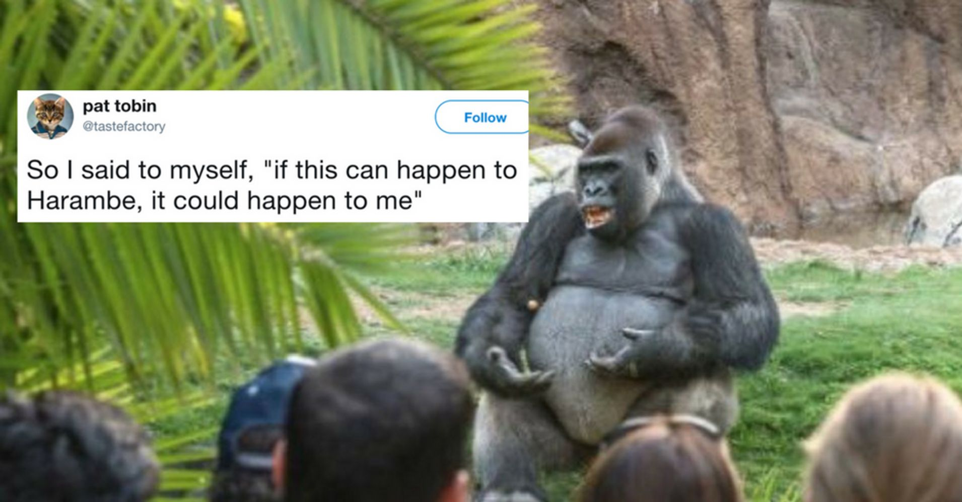 The Internet S Hottest New Meme Is This Gorilla Giving A Ted Talk