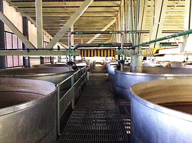 Fermenters at the Herradura distillery