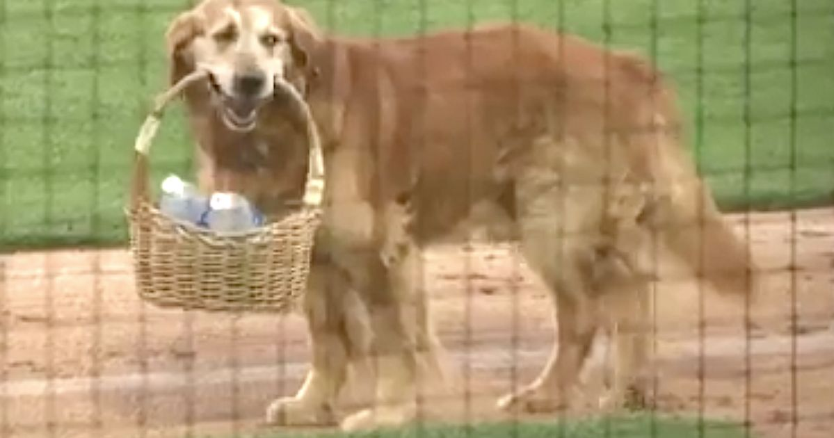 Very Good Dog Brings Water To Umpire During Baseball Game
