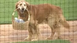 Very Good Dog Brings Water To Umpire During Baseball