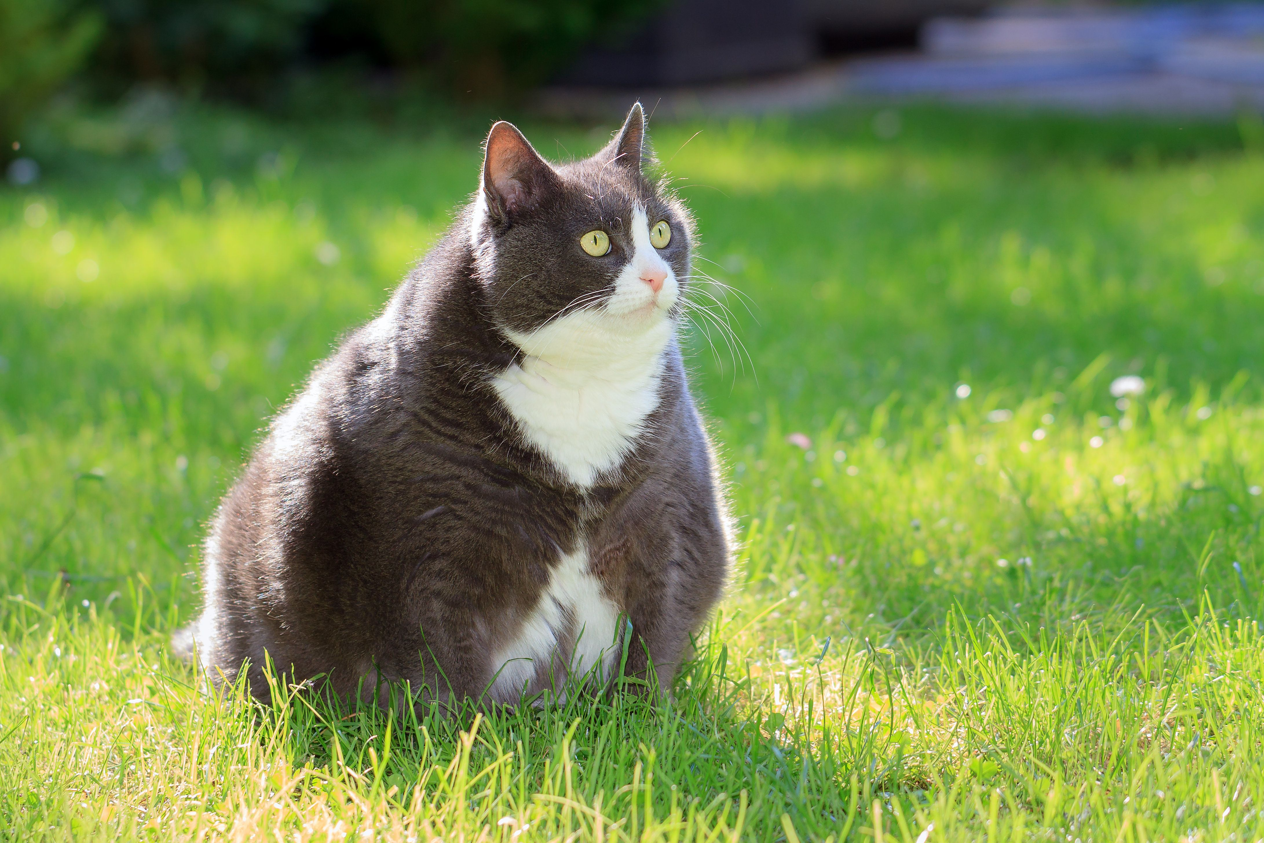 Fat pets are no joke.