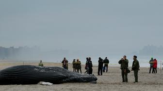 Pedestrians stop to look at a dead humpback whale that washed up on a beach in New York, U.S., April 4, 2017.  REUTERS/Lucas Jackson
