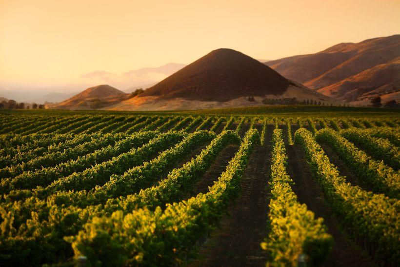 Edna Valley Vineyards