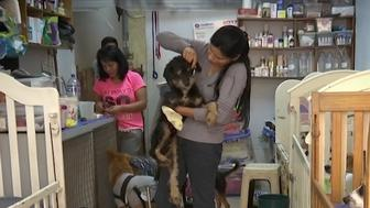 Sara Moran rescues mistreated dogs and nurses them back to health