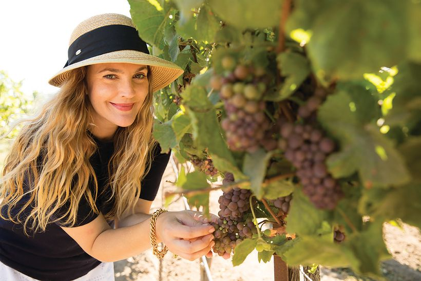Drew Barrymore checking on the grapes of her Carmel Road vineyard.
