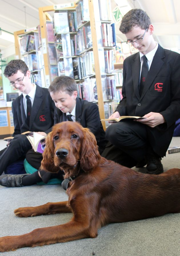 Tavistock College Adopts Shola The Puppy To Help Students Deal With Exam Stress And She Is