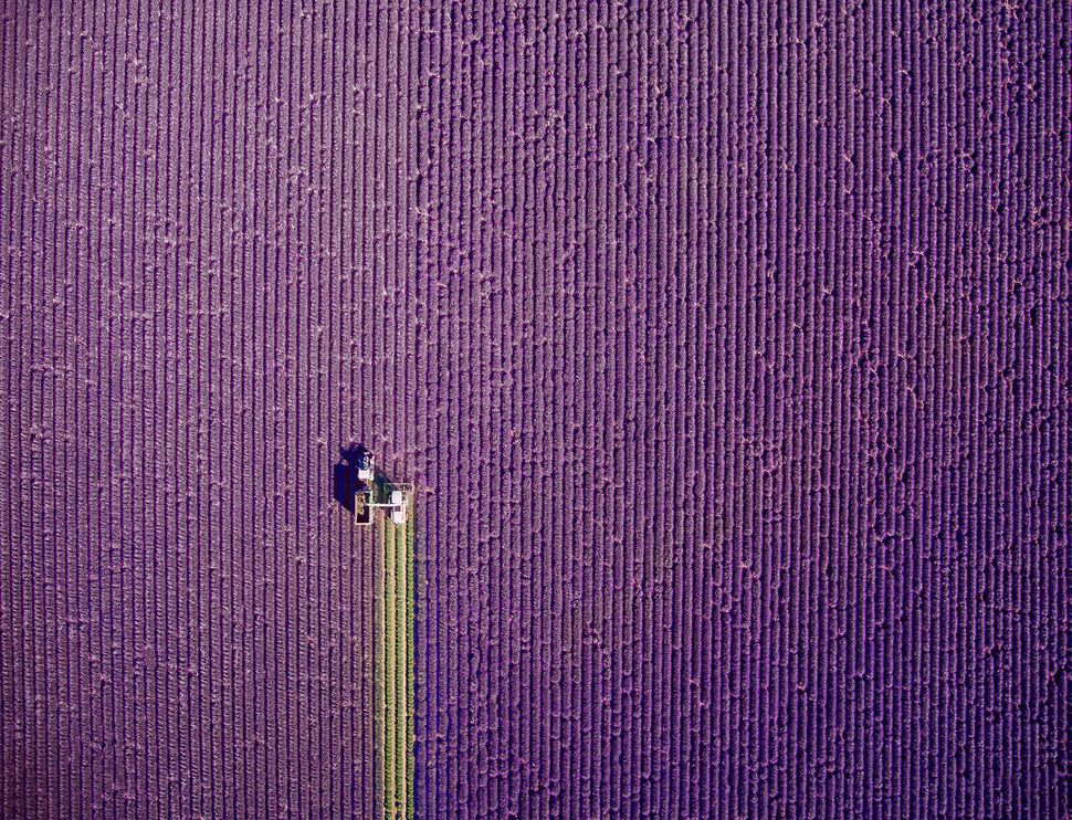 "<strong>First place: ""Summer Trim"" by Jerome Courtial, France.<br></strong>This photo is of a lavender field in Provence, Fra"